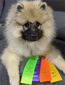 Camus Trick Dog certification