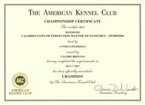 Mattise, AKC Champion certificate.