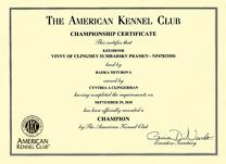 Vinny, AKC Champ cert.