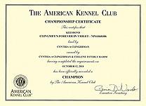 Violet AKC Championship cert.