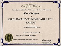 Kandy, Keeshond Show Championship certificate.
