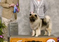 Kami, beautiful Keeshond