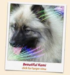Health Issues: Keeshond Health Issues