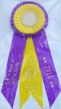 On 9/11/16 Boo won her 1st BOB.