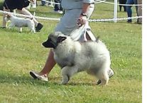 Boo won a BOB puppy