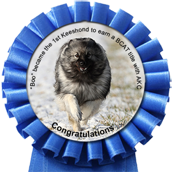 'Boo' became the 1st Keeshond to earn a BCAT title with AKC