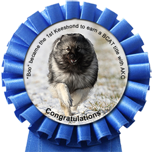 Boo became the 1st Keeshond to earn a BCAT title with AKC