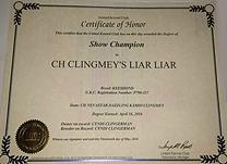 Jossa, Keeshond Show Championship certificate.
