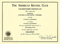 Jossa, AKC Champ cert.