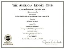 Kandy, Keeshond AKC Championship certificate.