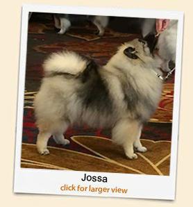 Jossa 'A Beautiful Keeshond'