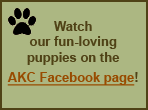 AKC video of our pups at play!